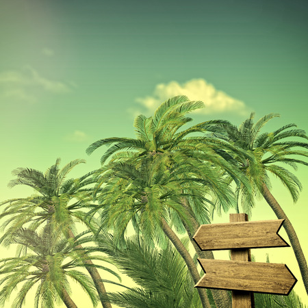 decision tree: Summer trip backgrounds with palm tree