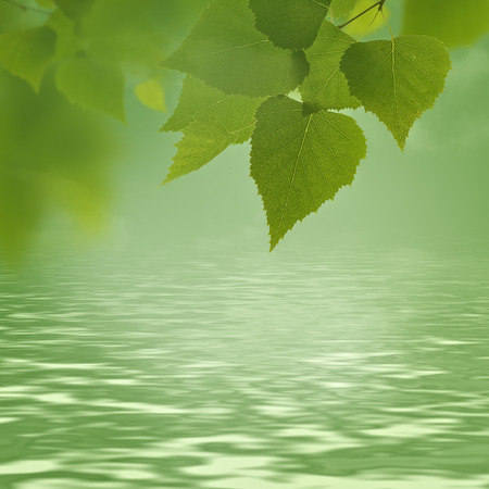 leaf water: abstract natural backgrounds with green foliage and beauty bokeh