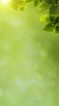 abstract natural banner with green foliage and beauty bokeh