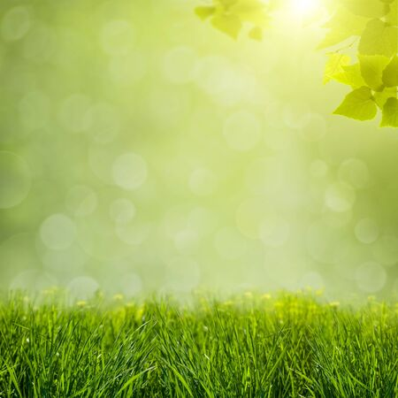 natural backgrounds: abstract natural backgrounds with green foliage and beauty bokeh