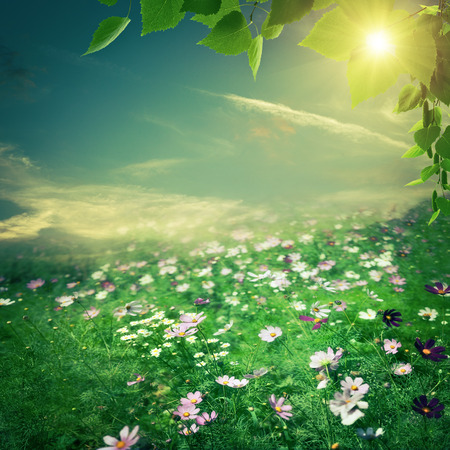 sky sun: Abstract natural backgrounds. Summer meadow with beauty flowers Stock Photo