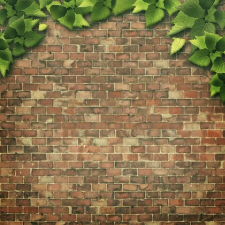 natural backgrounds: Abstract natural backgrounds. Green foliage over brick wall
