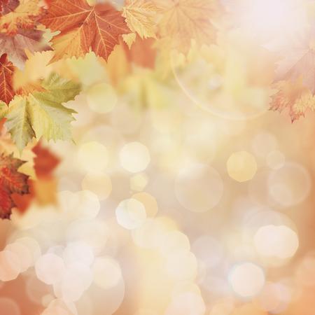 美しいボケ味を持つ抽象的な紅葉背景