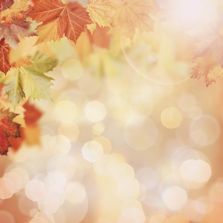 faded: Abstract autumnal backgrounds with beauty bokeh Stock Photo