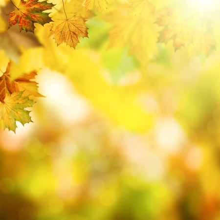 Abstract autumnal backgrounds with beauty bokeh Foto de archivo