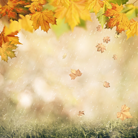 rain forest background: Abstract autumnal backgrounds with beauty bokeh and rain drops Stock Photo