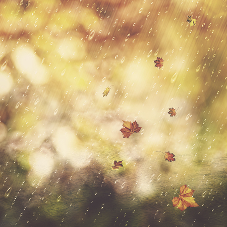 fall leaf: Autumn rain. Abstract seasonal backgrounds with fall and water drops