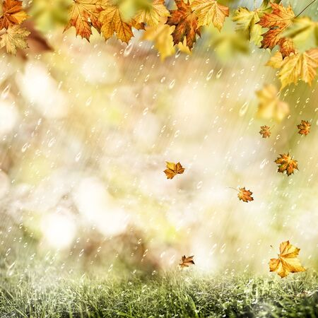 water fall: Autumn rain. Abstract seasonal backgrounds with fall and water drops