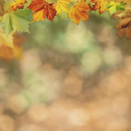 Abstracte herfst achtergronden voor uw ontwerp Stockfoto
