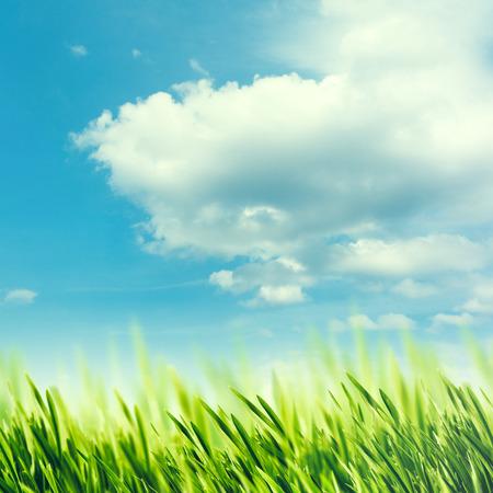blue green landscape: Summer rural abstract landscape with green grass under blue skies