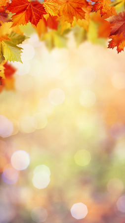 Herfst herfst in het bos, abstracte milieu-achtergronden