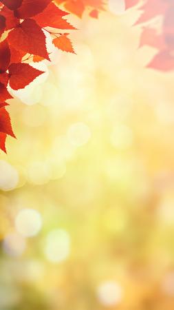 Herfst val in het bos, abstracte milieu-achtergronden