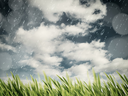 green grass: Beauty autumnal rain on the meadow, natural backgrounds Stock Photo