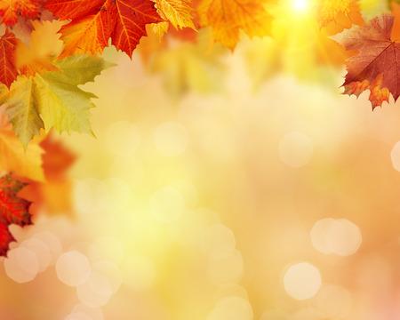 森林、美しいボケ味を持つ抽象的な環境背景に紅葉の秋