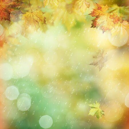lluvia: Lluvia octubre en el bosque, fondos ambientales abstractos