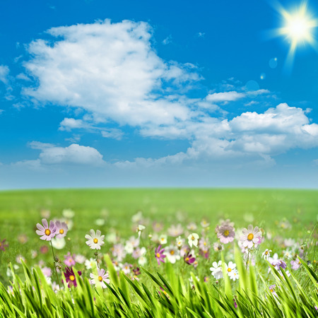 Schoonheid weide met bloemen en groen gras onder de blauwe hemel, seizoensgebonden achtergronden