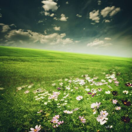 daisies: Beauty meadow with flowers and green grass under blue skies, seasonal backgrounds