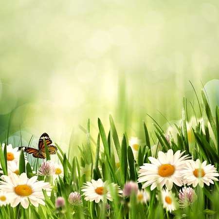 Beauty meadow with flowers and green grass under blue skies, seasonal backgrounds