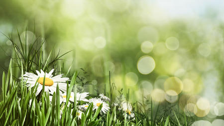 yellow flower tree: Beauty summer day with daisy flowers and bokeh, natural banner