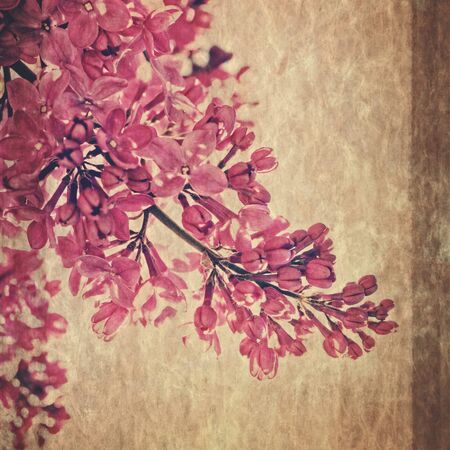Lilac flower retro fashioned post card with rice paper texture lilac flower retro fashioned post card with rice paper texture orient japanese style stock mightylinksfo
