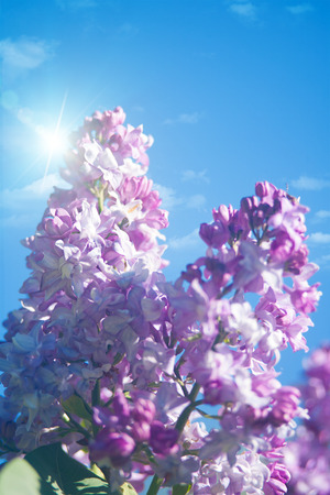 natural backgrounds: lilac flowers under blue skies, abstract natural backgrounds Stock Photo