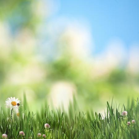美丽的季节背景,夏日午后的草地