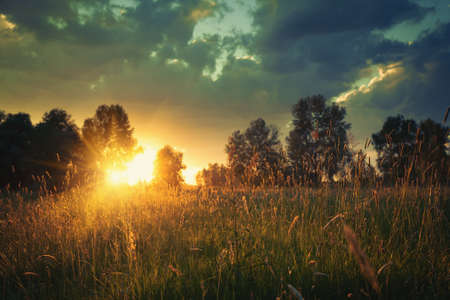 natural backgrounds: Summer meadow on the dusk, abstract natural backgrounds