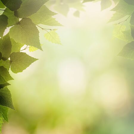 natural backgrounds: Sunny afternoon in the deep forest, natural backgrounds