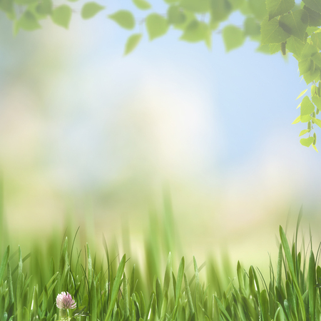 natural backgrounds: dreamy afternoon on the meadow, seasonal natural backgrounds