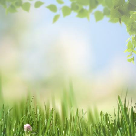 viento: tarde de ensueño en el prado, fondos naturales de temporada