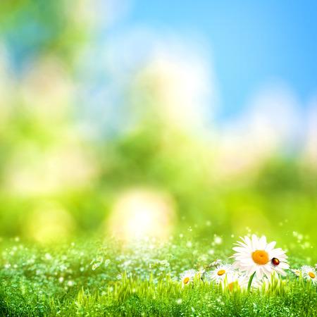 夢のような午後の牧草地、季節の自然の背景