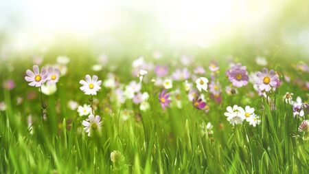 landscape flowers: Beauty seasonal landscape with wild flowers and grass Stock Photo