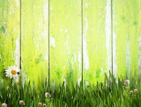 Espléndidas fondos de verano con la cerca vieja y la hierba verde Foto de archivo - 59992278