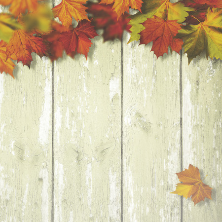 old desk: Abstract autumnal backgrounds with maple leaves over old wooden desk Stock Photo