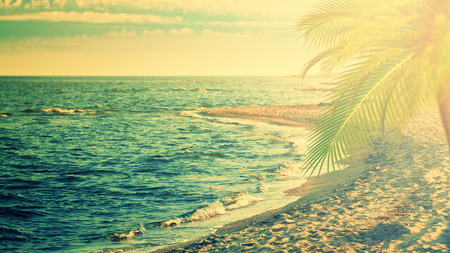 travel backgrounds: Beautiful sea, retro style travel backgrounds with ocean waves, palm tree and sky