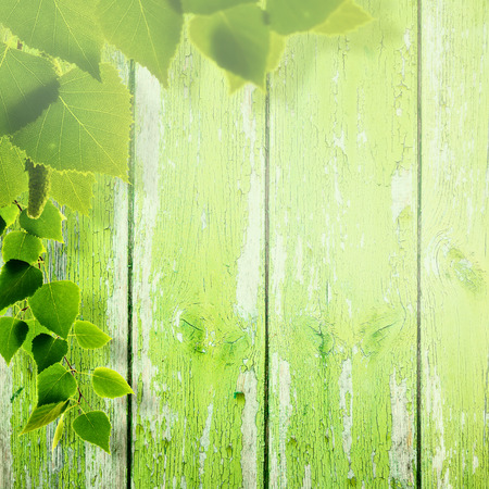 wooden fence: Abstract summer and spring backgrounds with foliage and wooden fence