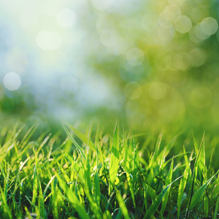 美丽的季节背景与绿色的夏季树叶和美丽的散景