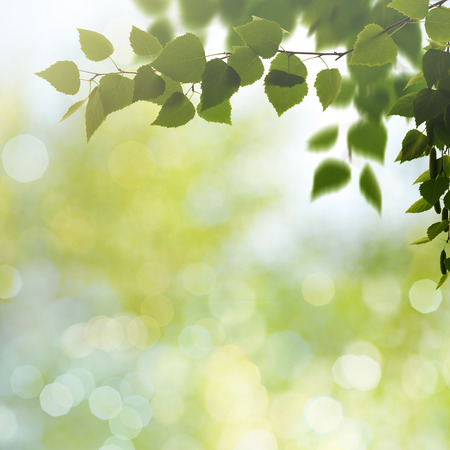 texture backgrounds: Beauty spring and summer backgrounds with birch tree and blurred seasonal texture