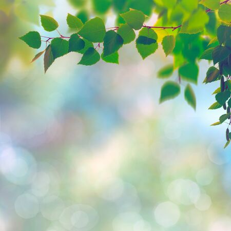 trees seasonal: Abstract seasonal backgrounds with beech trees and beauty summer texture Stock Photo