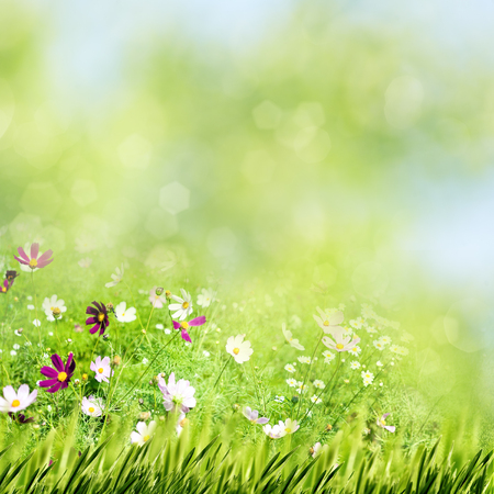 Beauty summer meadow with blooming flowers, seasonal abstract backgrounds
