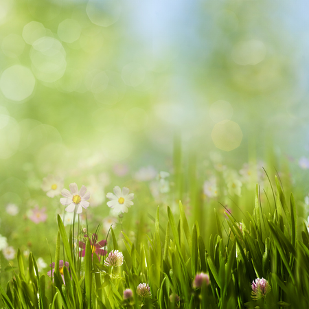 Beauty summer meadow with blooming flowers, seasonal abstract backgrounds Stock Photo