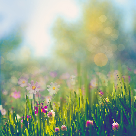 Beauty summer day, abstract rural landscape with blooming flowers and green grass Stock Photo