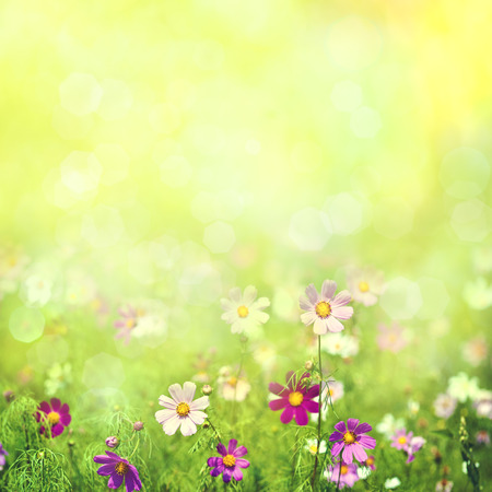 Beauty spring and summer landscape with fresh daisy flowers 版權商用圖片