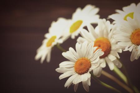 chamomile flower: Daisy flowers, beauty still life against old wooden desk