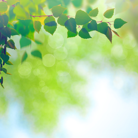 midday: Abstract seasonal backgrounds with beech trees and beauty summer texture Stock Photo