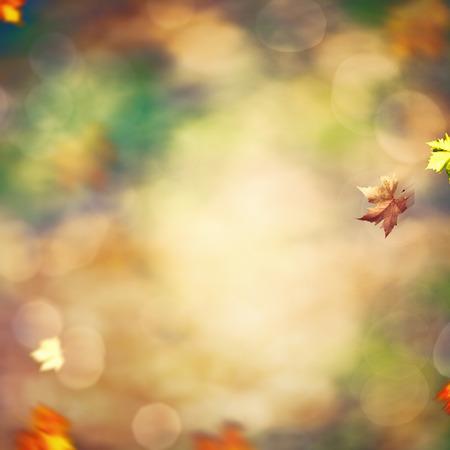 Beautiful seasonal backgrounds with fallen leaves against blurred natural landscape Standard-Bild
