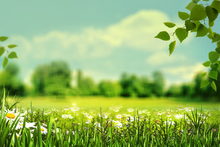 Summertime, abstract natural backgrounds with summer meadow, grass and wild flowers