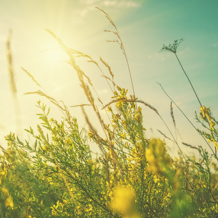 Summertime dreams. Abstract natural backgrounds with wild grass and flowers