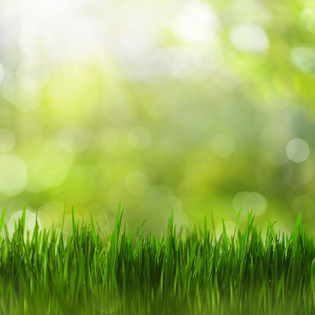 Summertime. Bright seasonal backgrounds with green grass and beauty bokeh Standard-Bild - 119337198