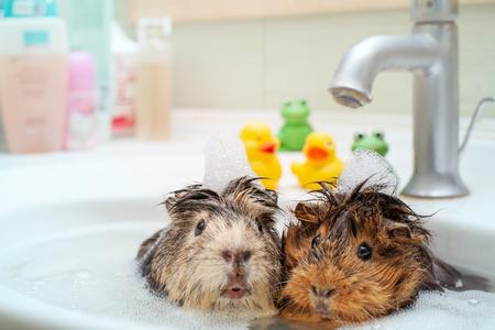 They love to swim together. Couple of funny animals шт еру bathroom Stock Photo